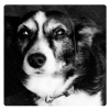 logodog